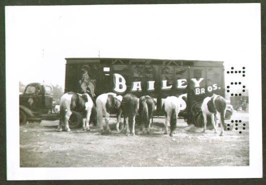 Bailey Bros Circus horses & truck 1946