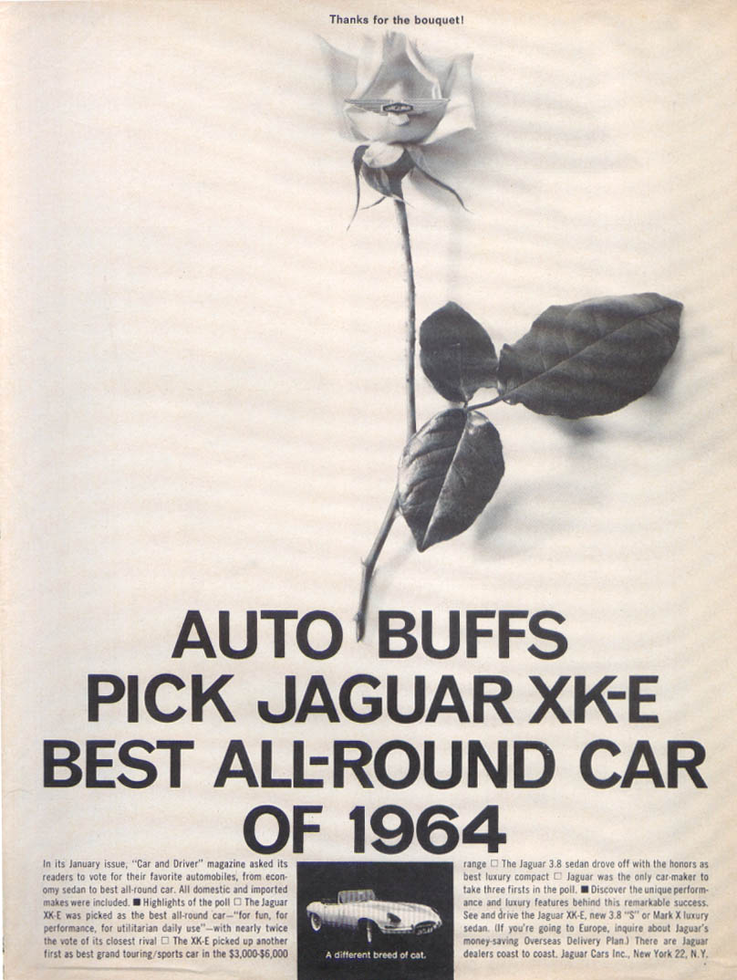 Image for Jaguar XK-E best all-round car ad 1964