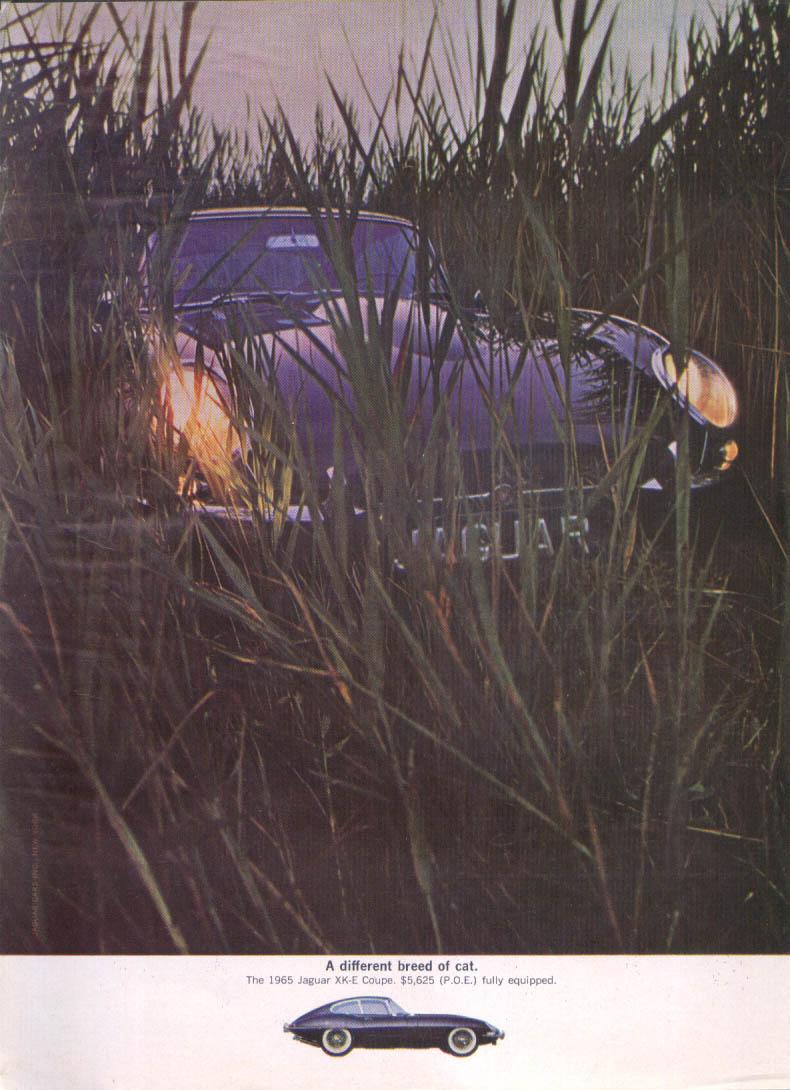 Jaguar XK-E Coupe hiding in tall grass ad 1965