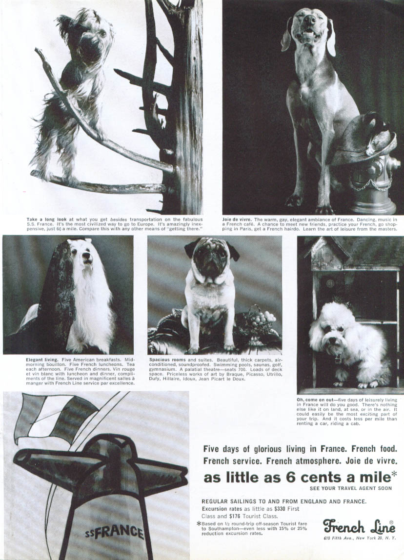 Image for Five days 6 cents a mile dog breed S S France ad 1965