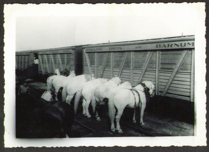 Draft Horses trackside Ringling Bros Circus photo 1937