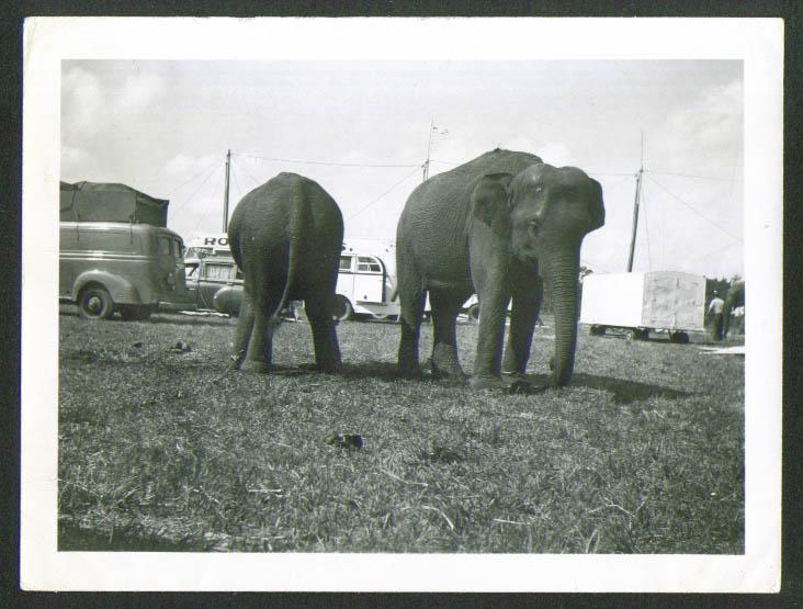 Image for Elephants Rogers Bros circus snapshot Orlando 4/4/52