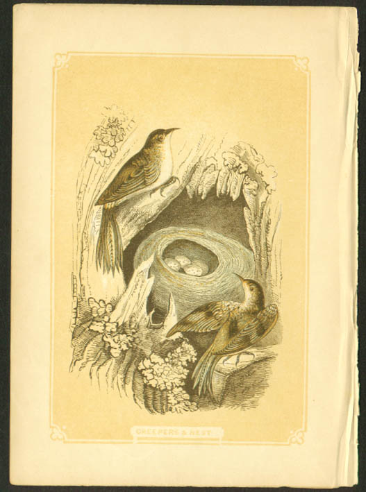 Creeper & Nest 1840s colored bird lithograph