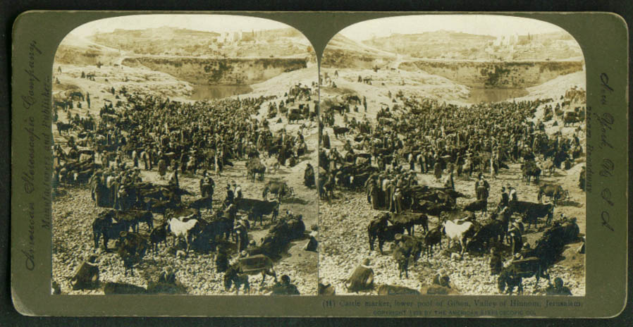 Cattle Market Gihon Jerusalem Palestine stereoview 1903