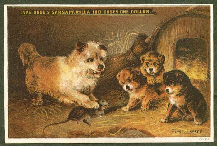 Teach pups to kill rat Hood's Sarsaparilla trade card