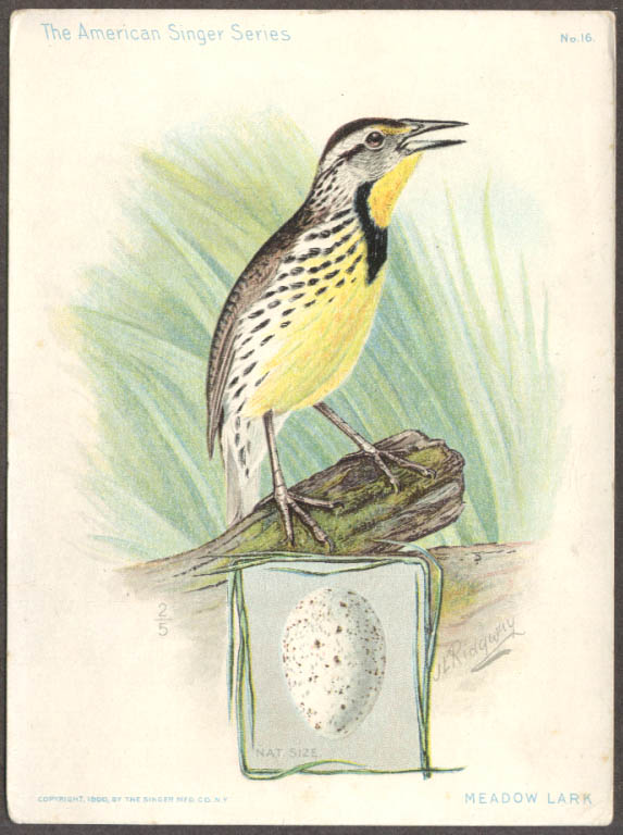 Image for Singer Sewing Machine American Singer Bird Series #16 Meadow Lark 1900