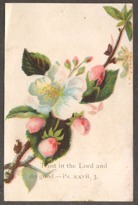 Image for Berean Baptist Church of Christ New York Order of Worship trade card 1880s