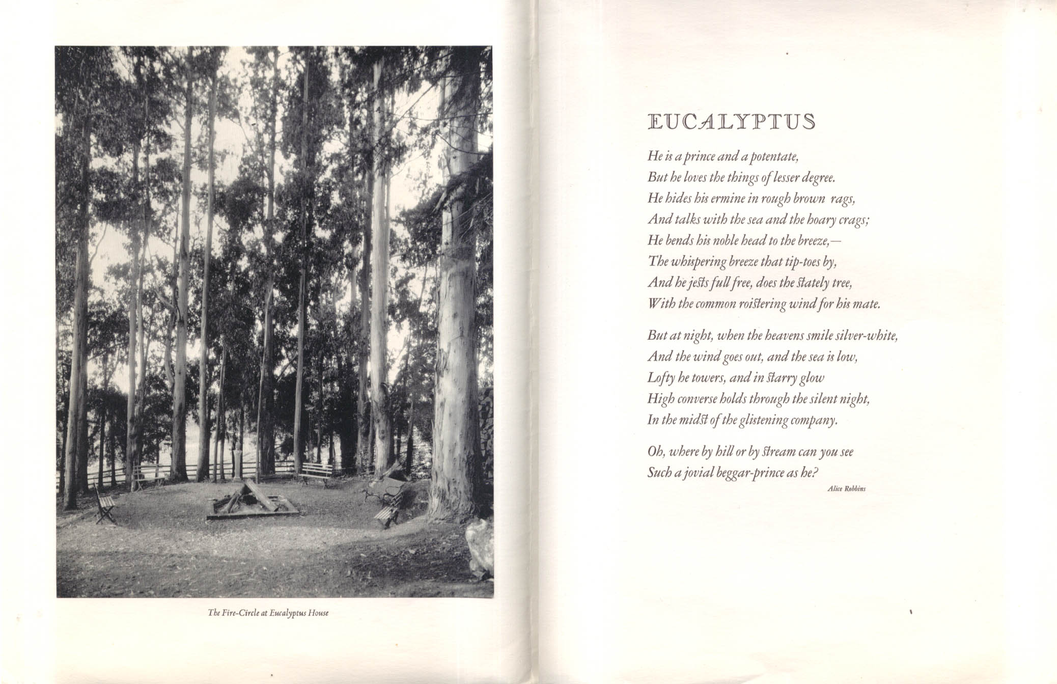 Alice Robbins: Eucalyptus: Xmas Card: Eucalyptus Press 1939