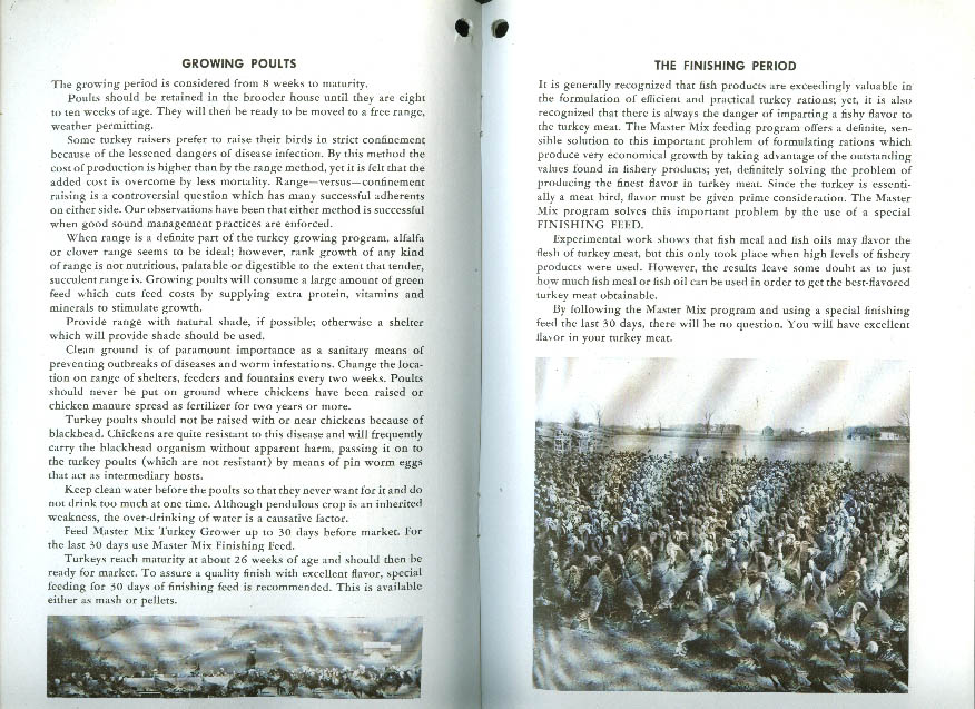 McMillen Feed Mills Master Mix Turkey Management for Profit booklet 1945