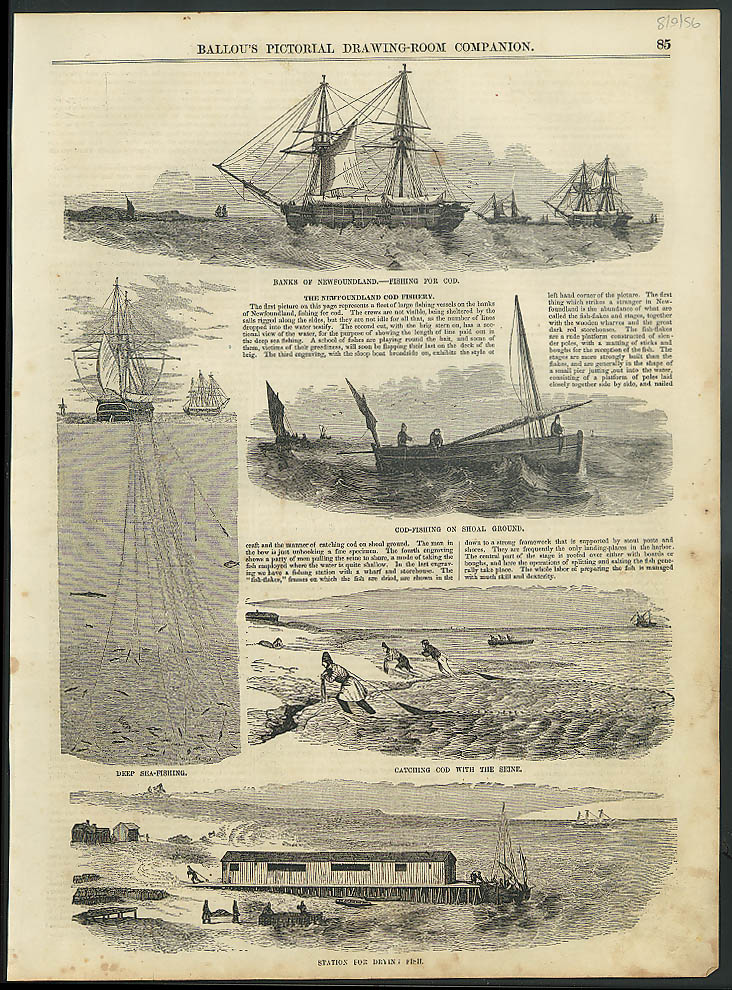 Newfoundland Cod Fishing page from BALLOU'S 8/9 1856