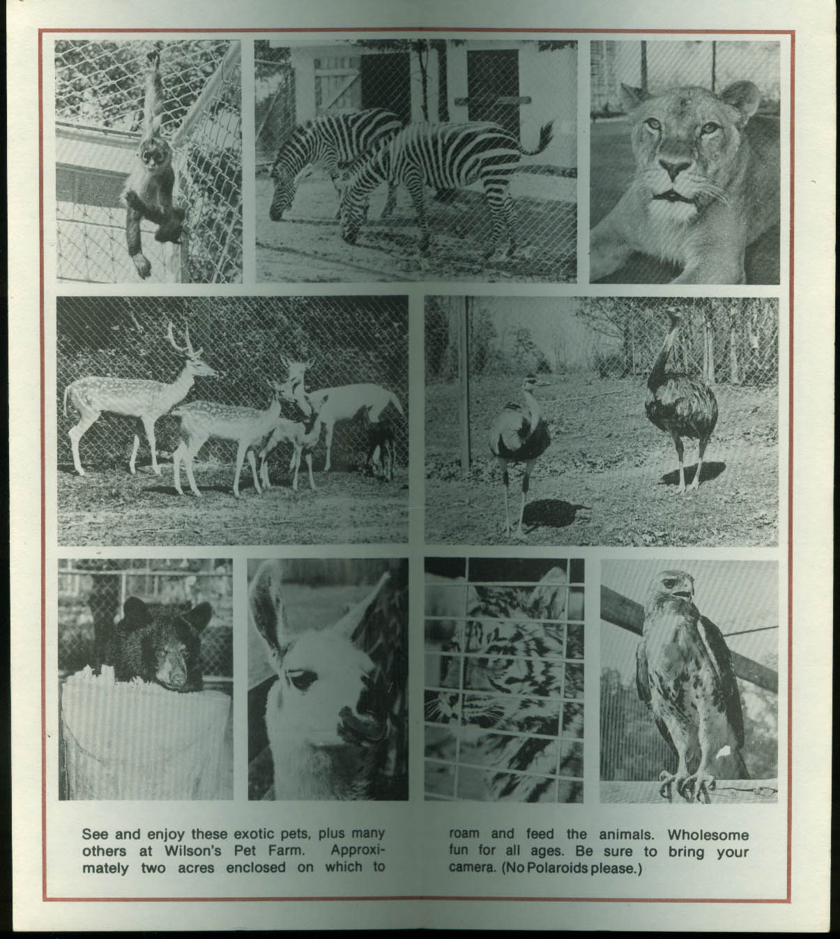 Wilson's Pet Farm Winchester VA tourist attraction folder 1960s