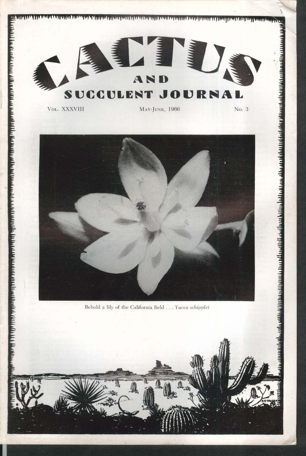 CACTUS Succulent Journal Yucca whipplei Centripetalia Puerto Villamil 5-6 1966