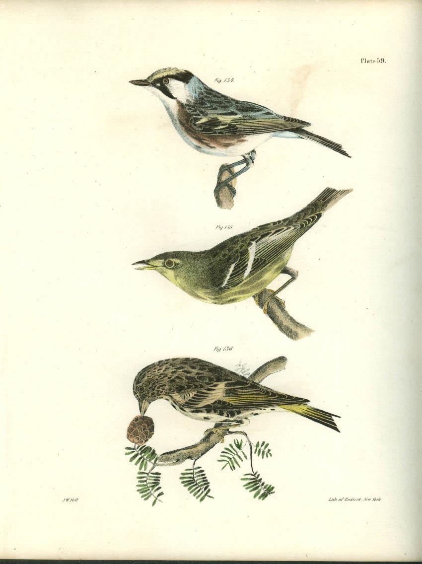 J W Hill hand-colored print 1844 Warbler 2 species & Pine Finch [Siskin]