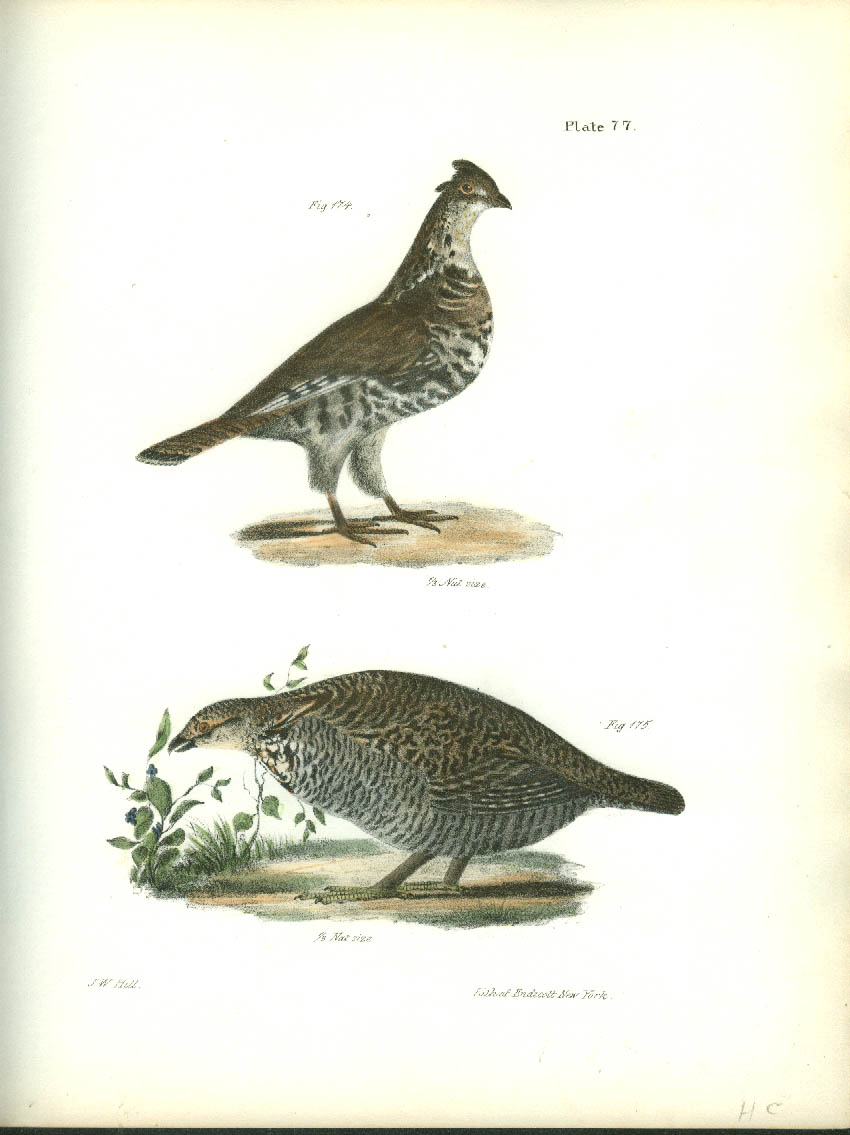J W Hill hand-colored print 1844 Common Partridge & Pinnated Grouse