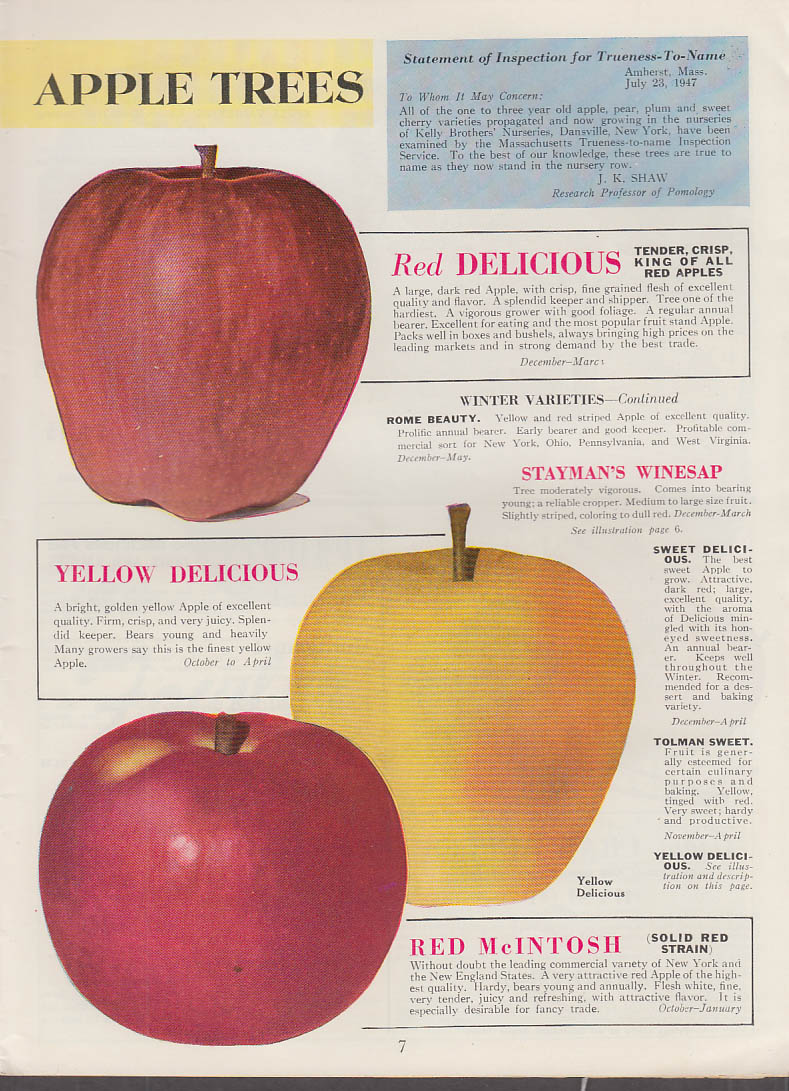 Kelly Bros Nursery & Seed Catalog 1948 Dansville NY shrubs fruit tres