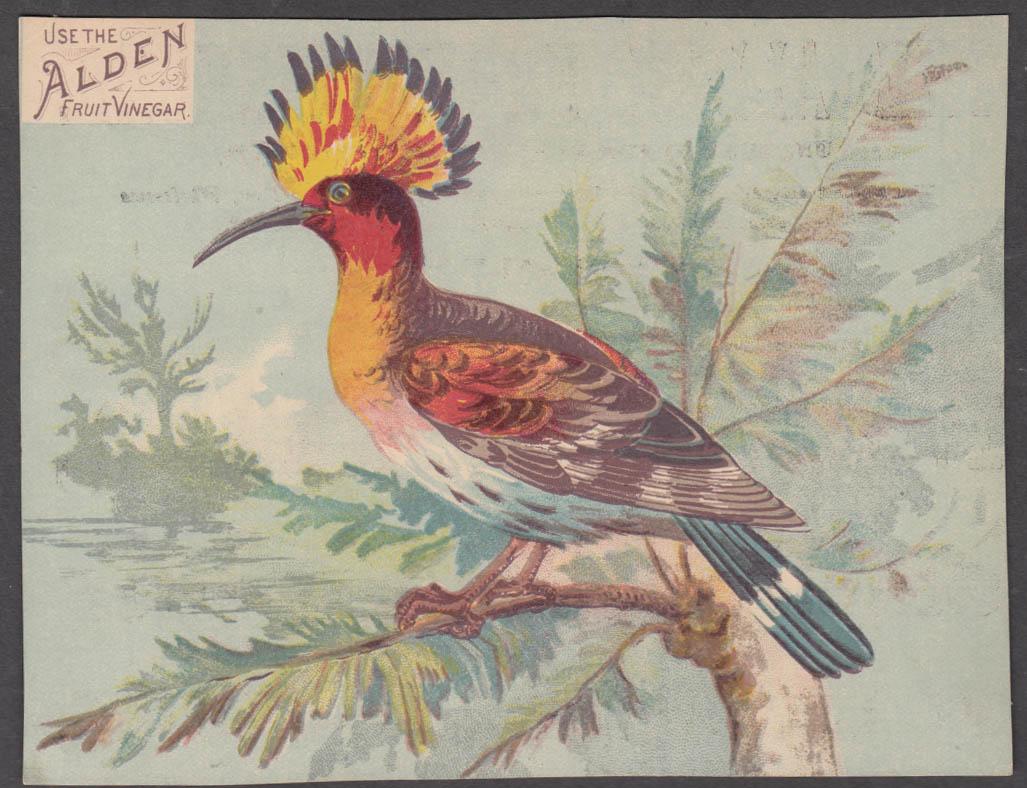 Alden Fruit Vinegar trade card Crested Hoopoe Whitwell Ft Plain NY 1880s