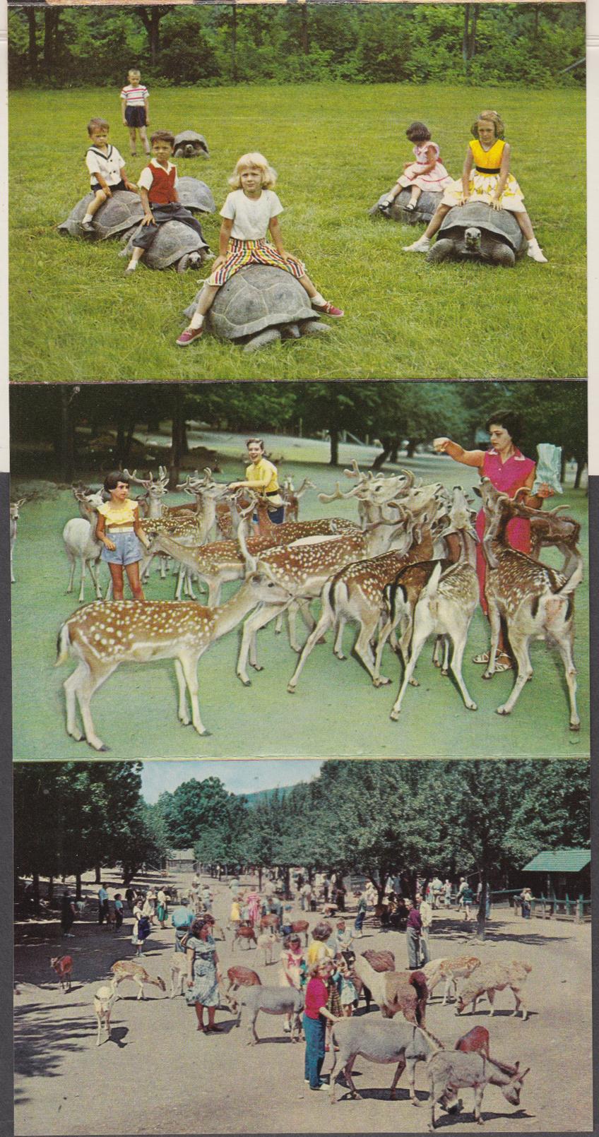 Catskill Game Farm cascade postcard folio Catskill NY 1956