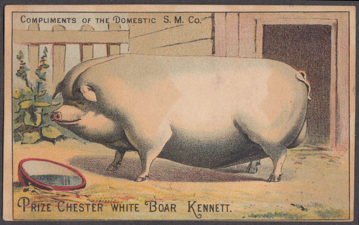 Image for Domestic Sewing Machine Prize Chester White Boar Kennett trade card 1880s