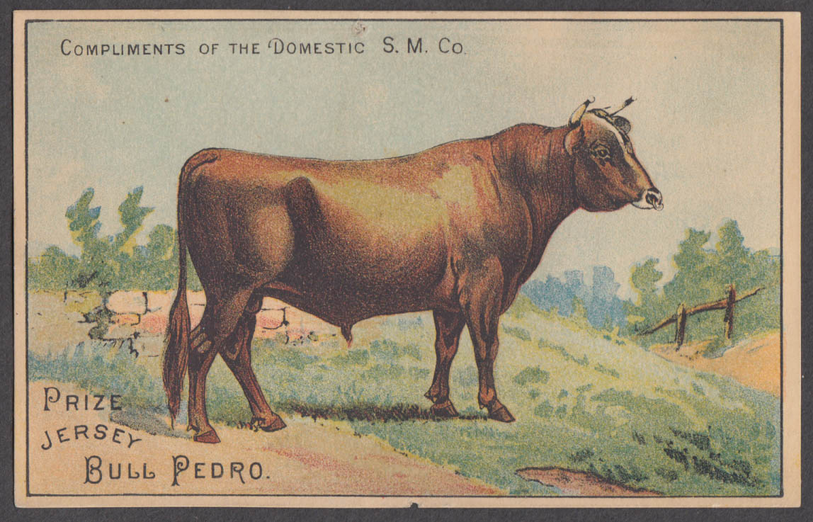 Image for Domestic Sewing Machine Prize Jersey Bull Pedro trade card 1880s