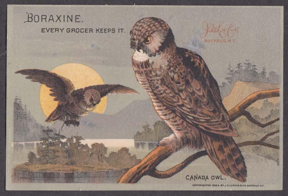 Boraxine Soap Cannot Injure Clothes trade card Canada Owl 1884