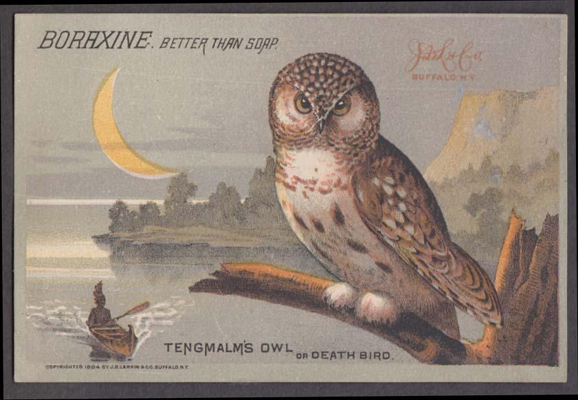 Boraxine Better than Soap trade card 1884 Tengmalm's Owl or Death Bird