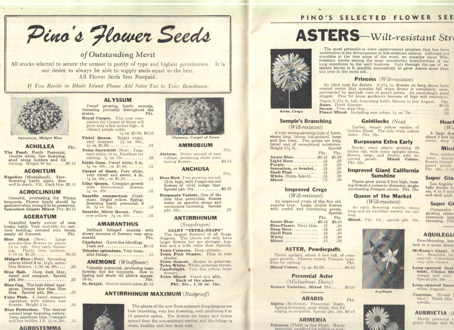 Image for Pino's Garden Book 1956 Flower Vegetable & Lawn Seeds catalog Providence RI
