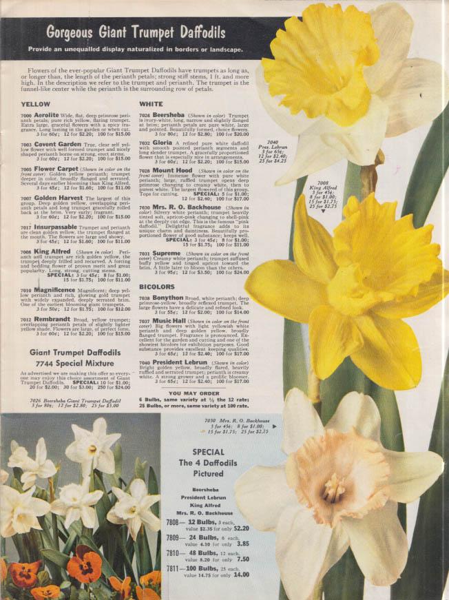 W Atlee Burpee Bulbs for Fall Planting Catalog 1959