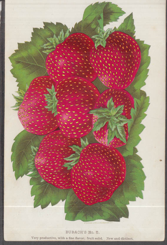 Stecher chromolithograph fruit plate 1880s: Bubach's No. 5 Strawberry