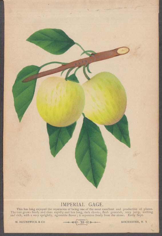 M Brunswick chromolithograph fruit plate 1880s: Imperial Gage Plum