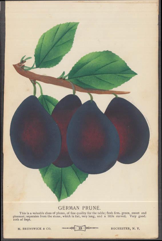 M Brunswick chromolithograph fruit plate 1880s: German Prune Plum