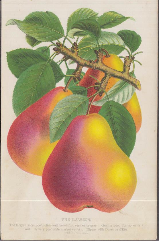 Stecher chromolithograph fruit plate 1880s: Lawson Pear