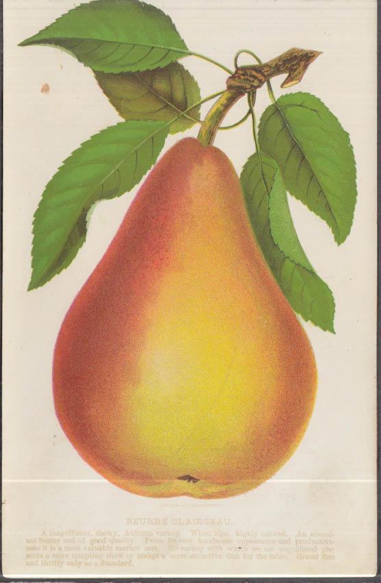 Stecher chromolithograph fruit plate 1880s: Beurre Clairgeau Pear