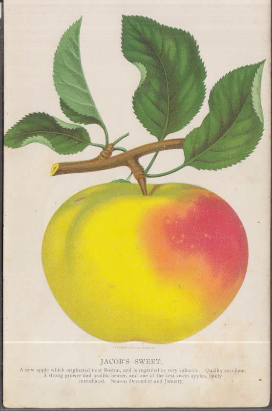 Stecher chromolithograph fruit plate 1880s: Jacob's Sweet Apple