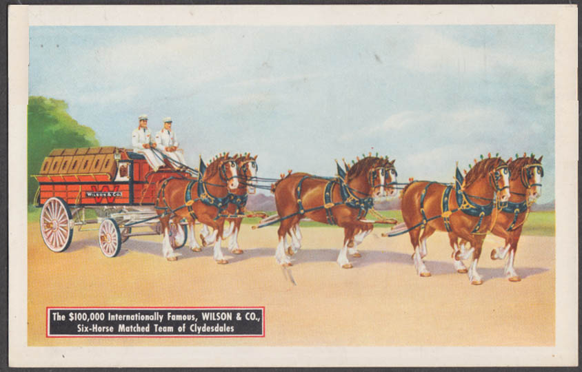 $100,000 Wilson Meat Packers 6-Horse Clydesdale Hitch postcard ca 1940s