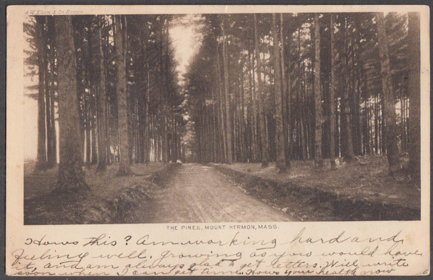 Image for A road through The Pines at Mount Hermon MA undivided back postcard 1906