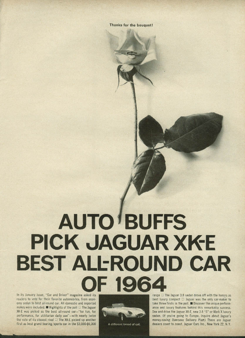 Image for Auto buffs pick Jaguar XK-E best All-Round car of 1964 ad