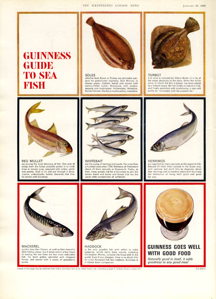 Image for Guinness Stout Guide to Sea Fish ad 1965 ILN