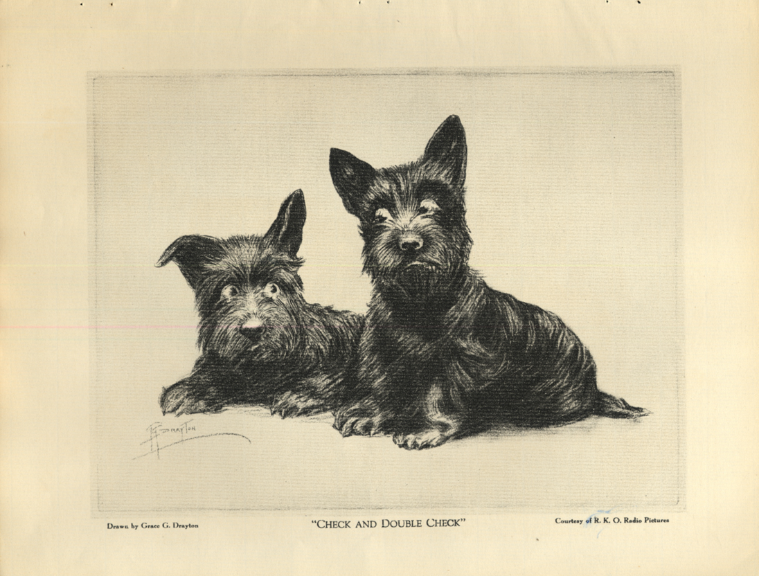 Image for Check and Double Check Scottie Dog Grace G Drayton print 1930