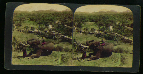 Ceylon elephant with natives 1900s stereoview