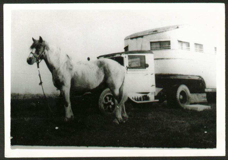 "Fuller Family Circus Ring Horse ""Mickey"" 5x7 1947"