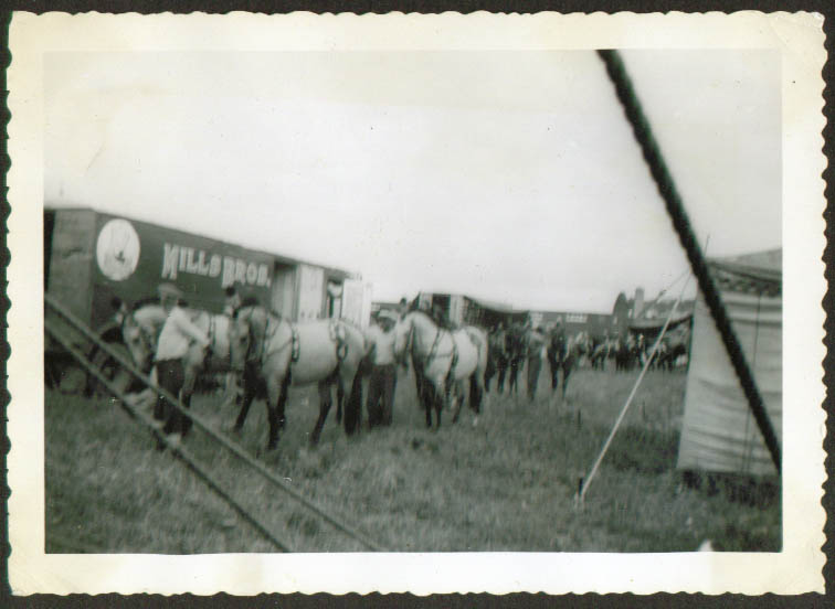 Show horses Mills Bros Circus Pittsfield MA photo 1954