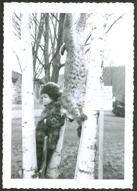 27lb bobcat shot dead by Tom Dyer Canton CT photo 1950s