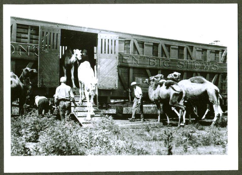 Unloading camels John Robinson Circus Train 1920