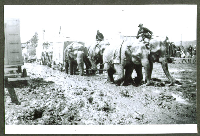 Al G Barnes Circus 4-elephant team in mud backlot c 30s