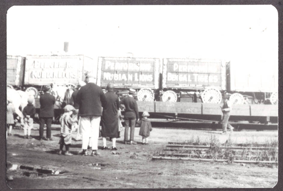Big Cat Wagons on Christy Bros circus train photo 1920
