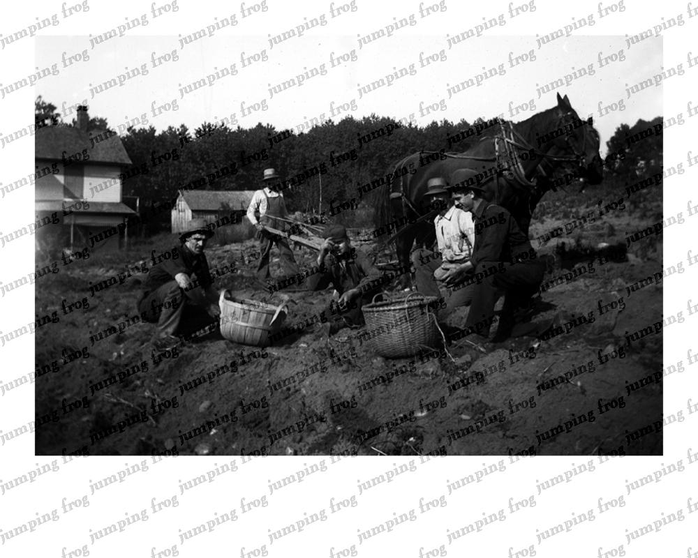 5 potato farmers digging & horse & plow 8x10 ca 1880s