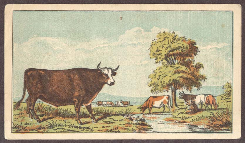 Boston Beef packing Slaughterers & Packers trade card