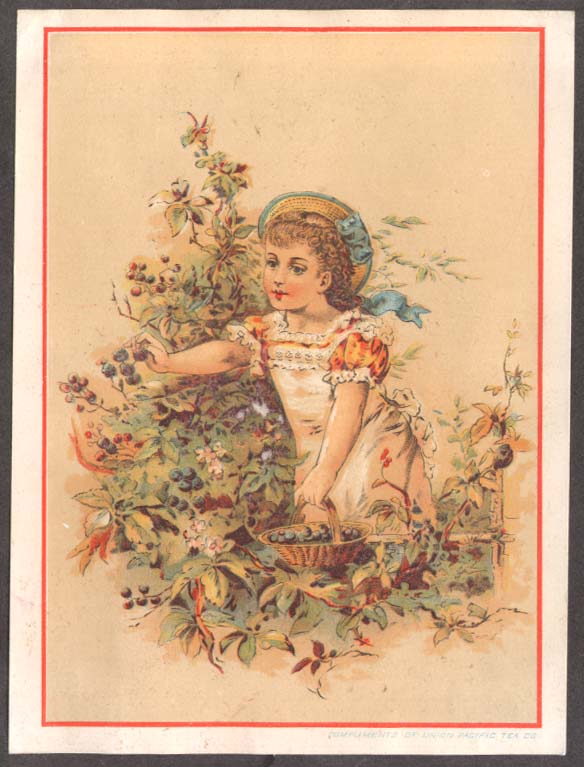 Image for Union Pacific Tea NYC trade card girl picking berries