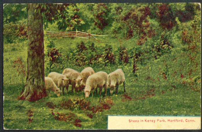 Sheep in Keney Park Hartford CT postcard 1910s