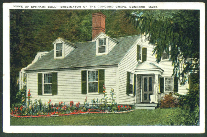 Ephraim Bull House Grape Concord MA postcard 1910s